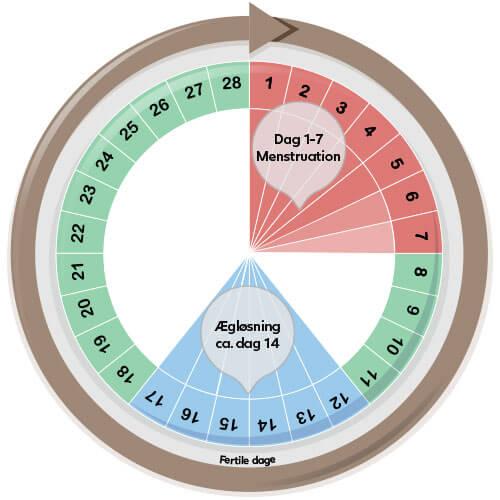 Menstruationscyklus på 28 dage – start med at teste på dag 12.